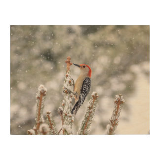 14x11 Red-bellied Woodpecker in the snow Wood Print