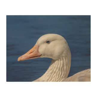 14x11 White Canadian Goose Wood Print