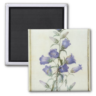 15:Campanula: Medium  1787 Square Magnet