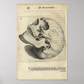 1616 Vintage Skull Anatomy Print