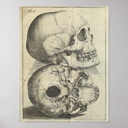1616 Vintage Skulls Anatomy Print
