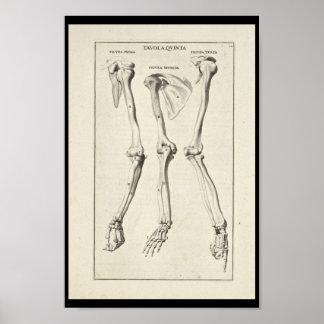 1691 Artistic Anatomy Arm Bones Art Print