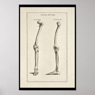 1691 Artistic Anatomy Leg Bones Art Print