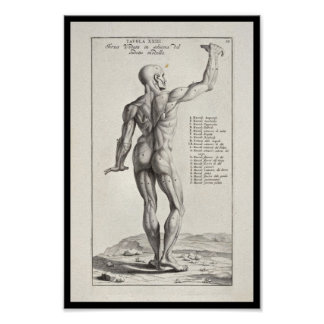 1691 Artistic Anatomy Muscles Body Art Print