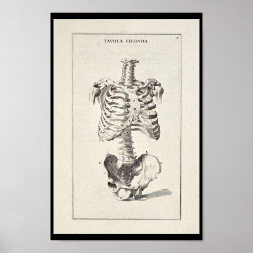 1691 Artistic Anatomy Skeleton Art Print