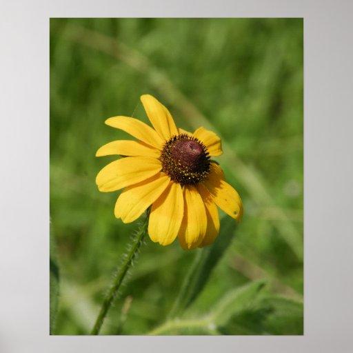 16x20 Wildflower Brown Eyed Susan Flower Posters