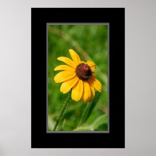 16x24 Wildflower Brown Eyed Susan Flower Posters