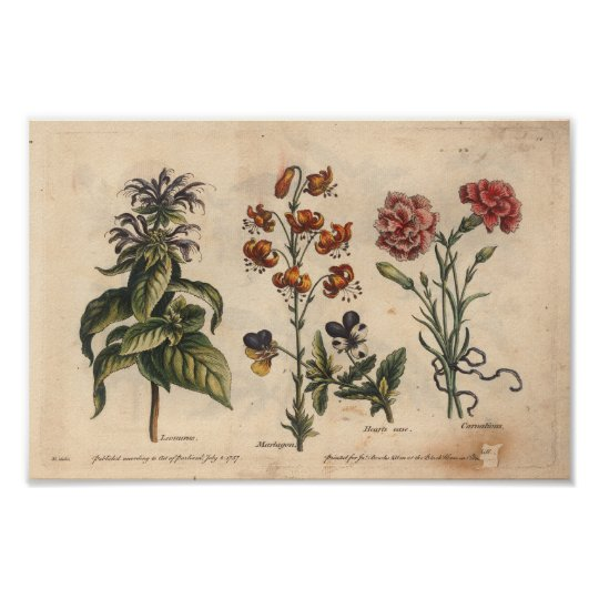 1757 Botanical Flower Art Print Carnation