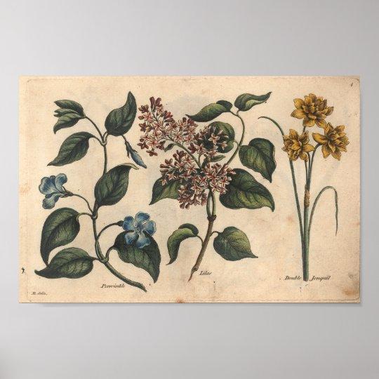 1757 Botanical Flower Art Print Periwinkle