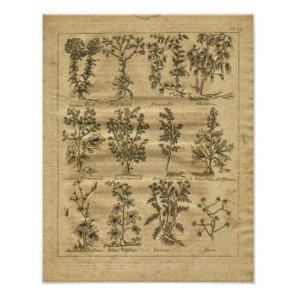 1817 Wormwood Yucca Culpeper Herbal Print