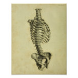 1824 Human Skeleton Anatomy Print