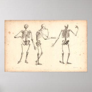 1833 Skeletons Vintage Anatomy Print