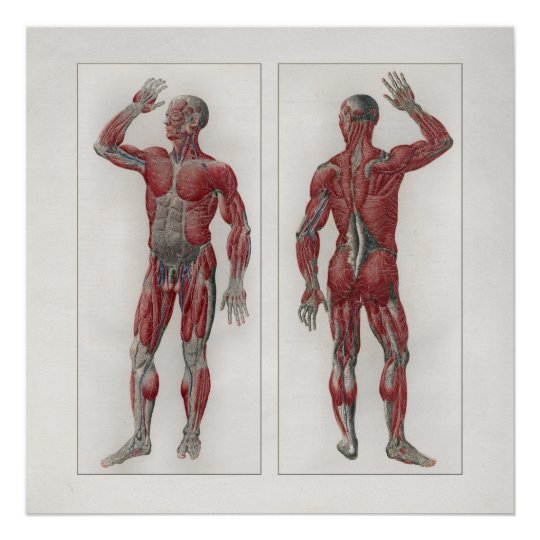1833 Vintage Muscles Nerves Anatomy Poster