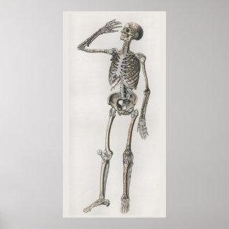 1833 Vintage Skeletal Bones Anatomy Poster