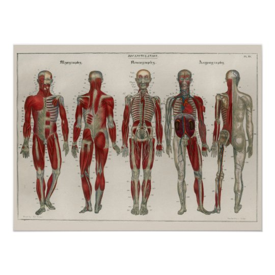 1837 Vintage Muscles Nerves Anatomy Art Poster