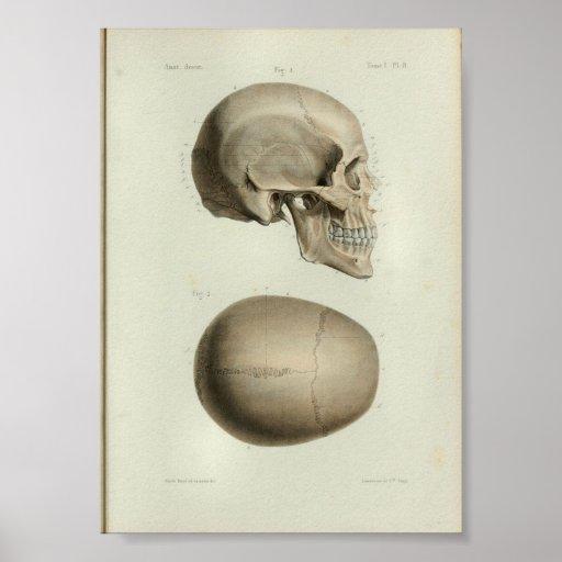 1844 Vintage Anatomy Print Human Skull