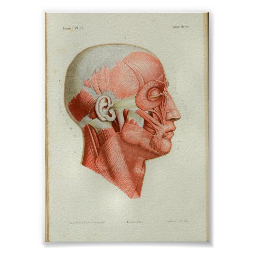 1844 Vintage Anatomy Print Muscles Face