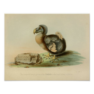 1848 Dodo Bird Vintage Color Print