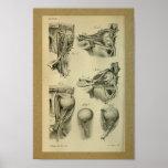 1850 Vintage Anatomy Print Eye Muscles
