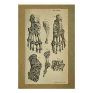 1850 Vintage Anatomy Print Foot Ankle