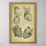 1850 Vintage Anatomy Print Human Heart