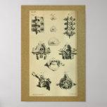 1850 Vintage Anatomy Print Spinal Vertebrae