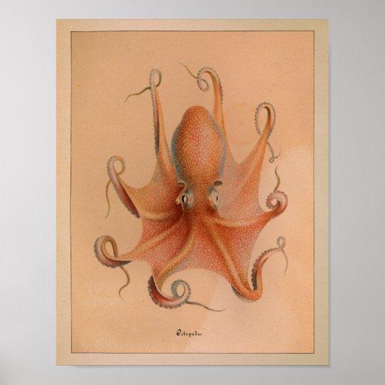 1851 Vintage Colour Octopus Print
