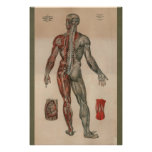 1851 Vintage Nerves Muscle Anatomy Chart