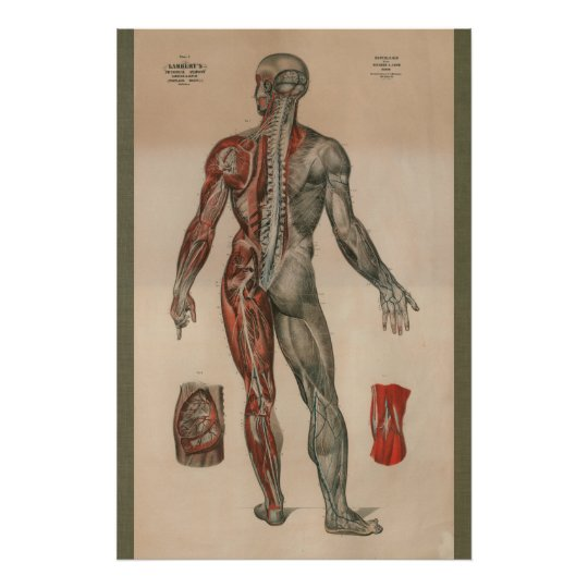 1851 Vintage Nerves Muscle Anatomy Chart Poster