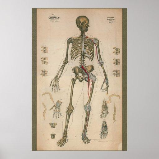 1851 Vintage Skeletal Anatomy Chart