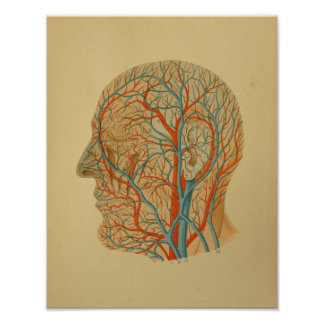 1879 Vintage Anatomy Print Head Arteries Veins