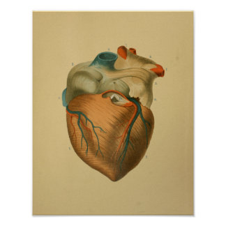 1879 Vintage Anatomy Print Human Heart
