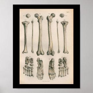 1879 Vintage Bock Anatomy Print Leg Foot