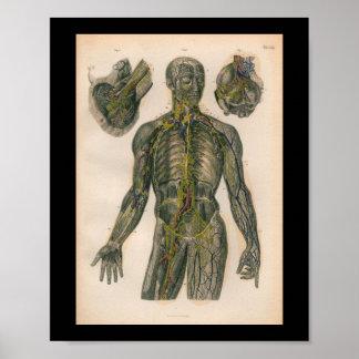 1879 Vintage Bock Anatomy Print Nerves