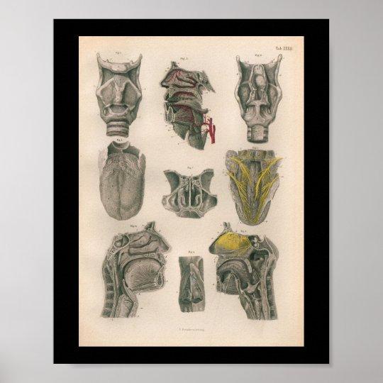 1879 Vintage Bock Anatomy Print Nose Throat