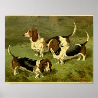 1881 Vintage Basset Hounds Print