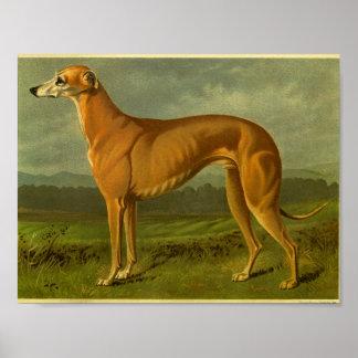 1881 Vintage Greyhound Print