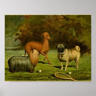1881 Vintage Terrier and Pug Print