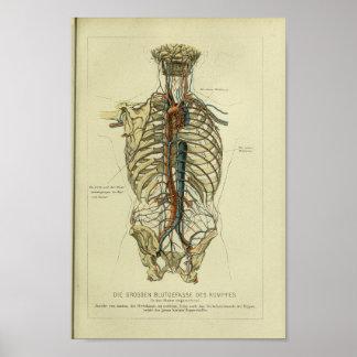 1886 Vintage Human Artery Anatomy Print
