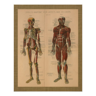1888 Skeleton Muscle Anatomy Vintage Poster