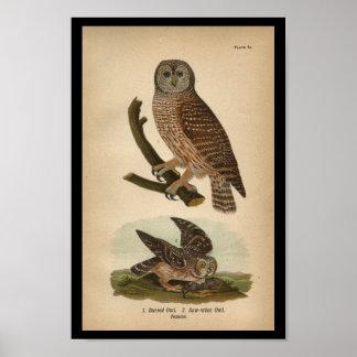 1890 Bird Print Barred Owl