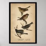 1890 Bird Print English Sparrow