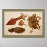1896 Vintage Colour Octopus Squid Print
