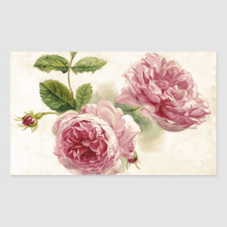 18th Century Pink Rose Study Rectangular Sticker