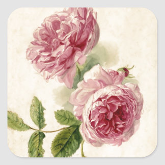 18th Century Pink Rose Study Square Sticker