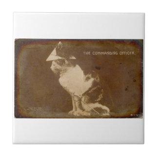 1906 The Commanding Officer dressed cat RPPC Tile