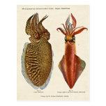 1913 Sepia und Octopus Post Cards