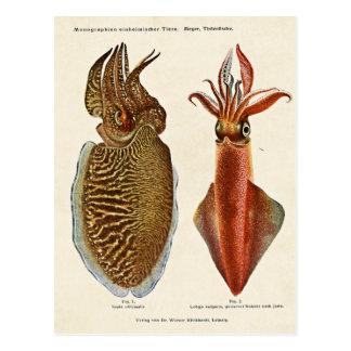 1913 Sepia und Octopus Postcard