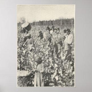 1916  Picking Cotton Poster