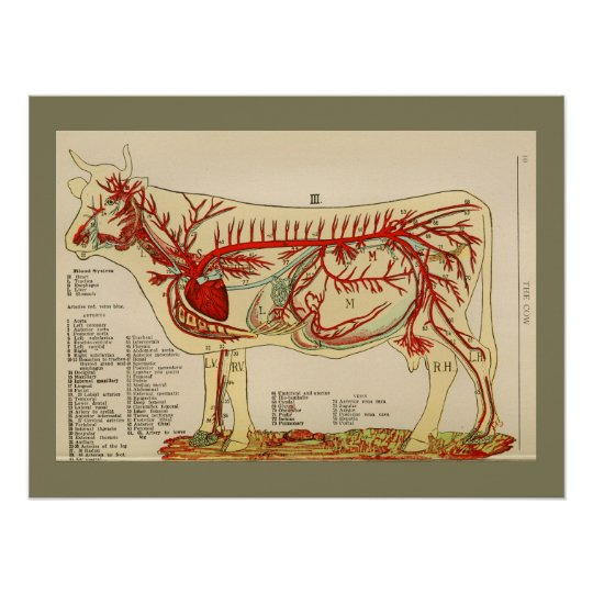 1917 Vintage Cow Artery Anatomy Chart